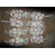 Normal White Garlic High Quality